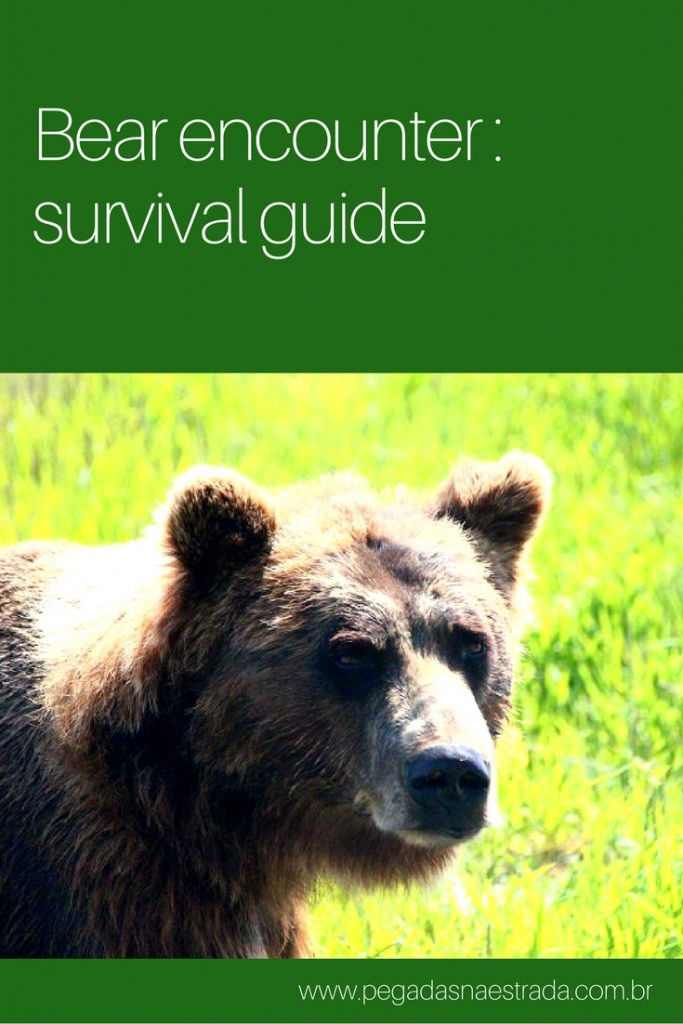 survive bear encounter