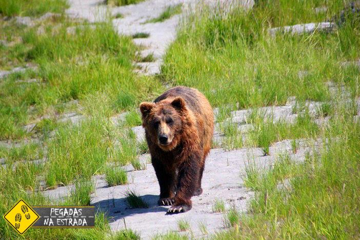 Urso Black Alasca