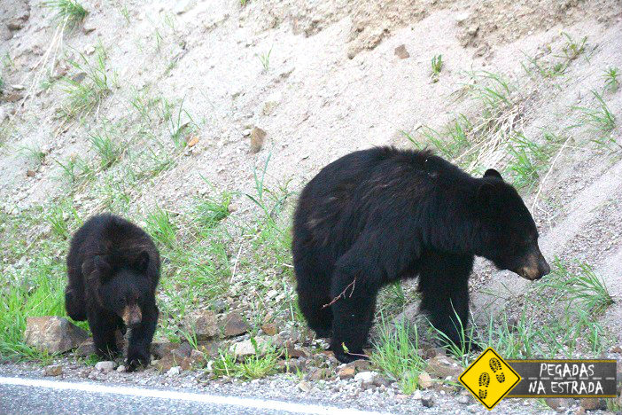 urso filhote