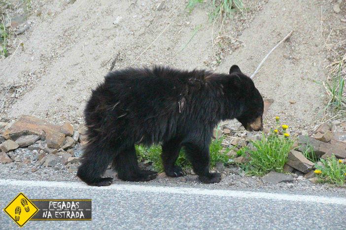 Guia Ursos Alasca como sobreviver