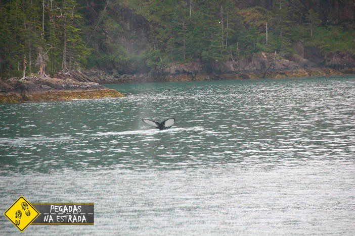 baleia Alasca vida selvagem