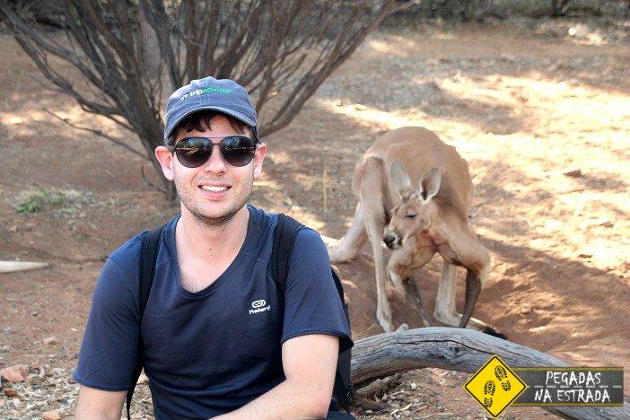 Canguru Austrália Alice Springs desert park