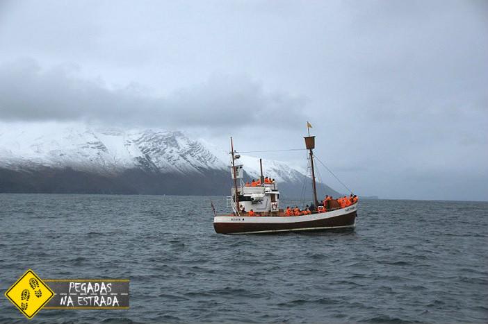 islandia iceland whale watching Husavik