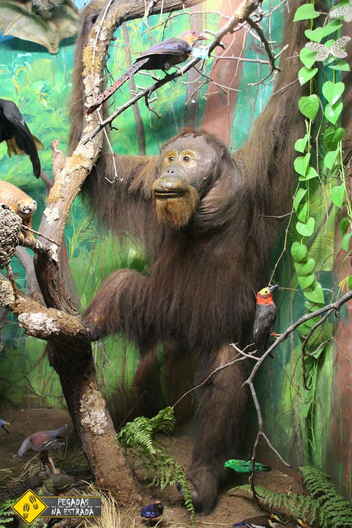 Museu de História Natural. Foto: CFR / Blog Pegadas na Estrada