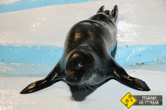 Foca no Polaria Aquarium em Tromso. Foto: CFR / Blog Pegadas na Estrada