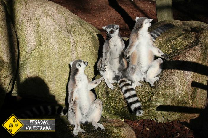 Lêmure no zoológico de Skansen. Foto: CFR / Blog Pegadas na Estrada
