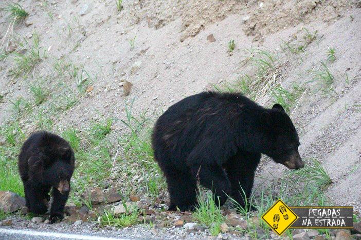 bear Yellowstone roteiro viagem wyoming