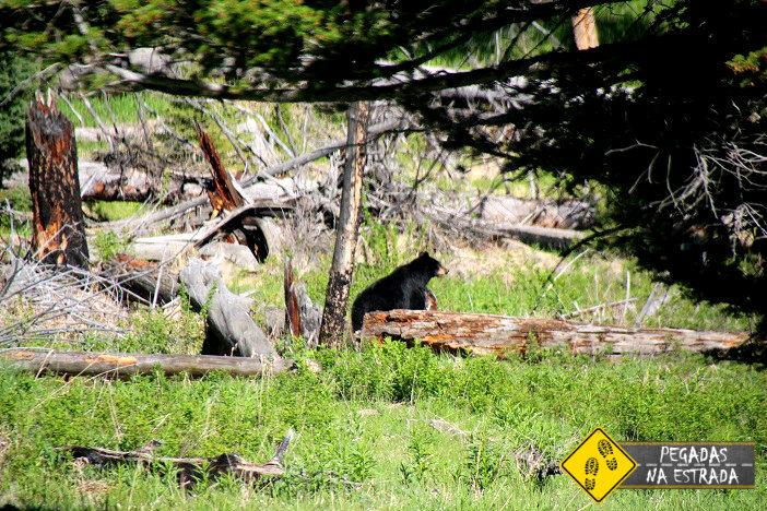 viagem turismo Yellowstone National Park