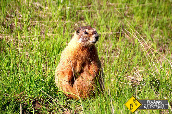 parques nacionais americanos marmott utah