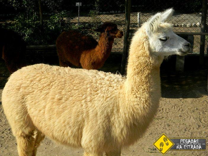 animais Peru