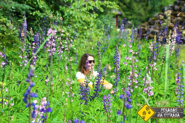 Wells Gray Provincial Park flower