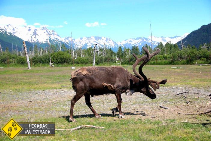 Achorage Seward Alaska