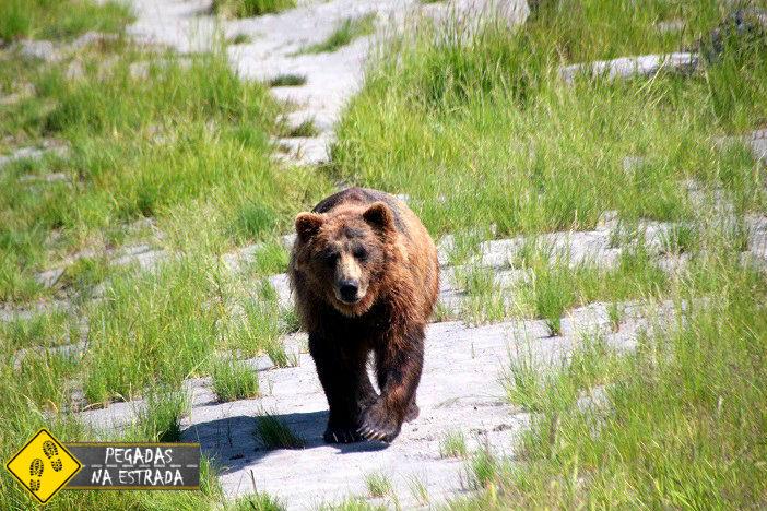 urso Alasca