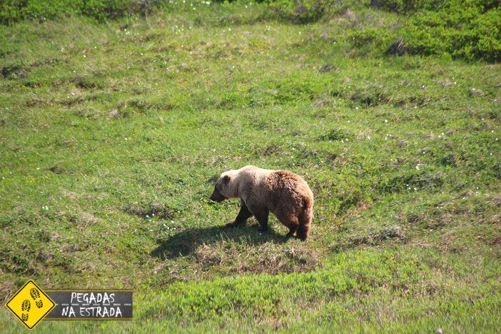 Grizzle Bear Denali Alaska