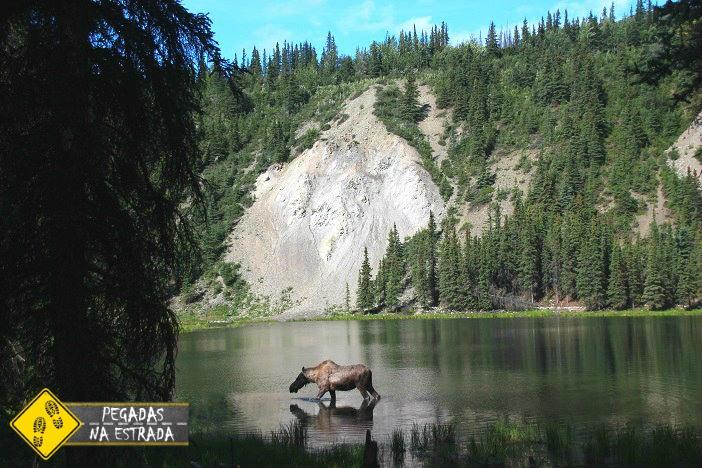 vida selvagem no Alasca