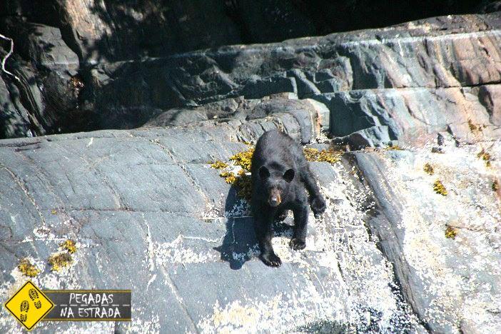 urso Juneau