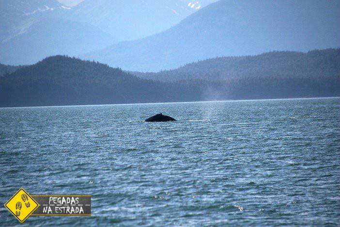 baleia Alasca