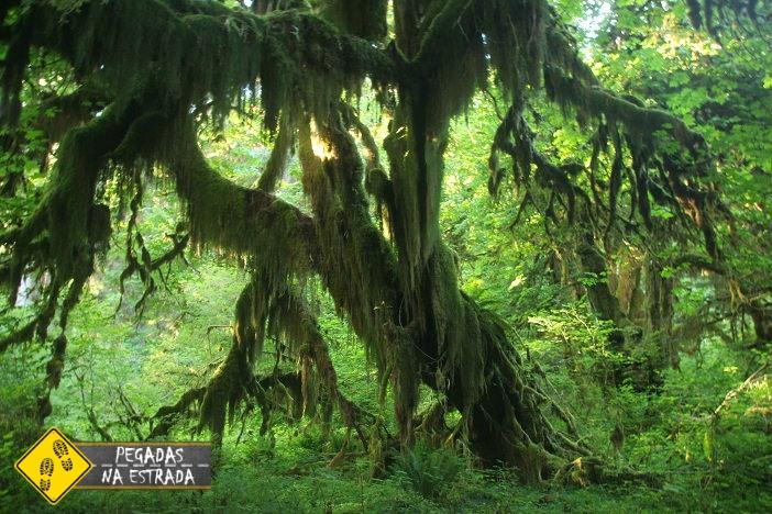Floresta temperada úmida