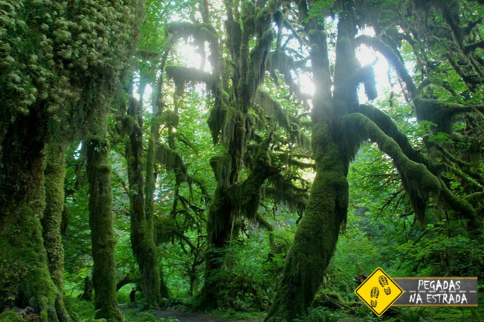 Hoh Rain Forest Olympic National Park roteiro Washington