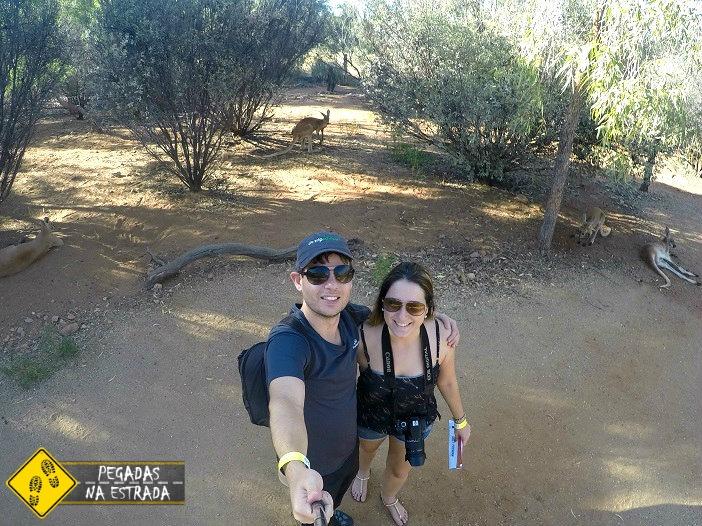 Canguru Alice Springs Desert Park outback