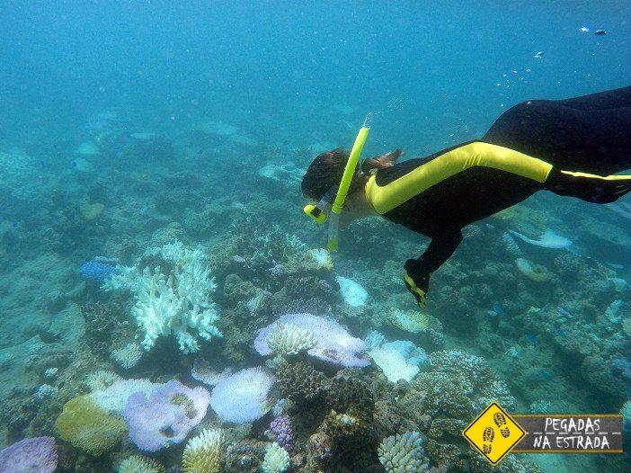 Snorkel na Grande Barreira de Corais da Austrália