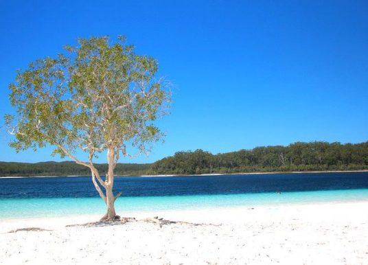 Fraser Island: roteiro e dicas para uma autêntica aventura na Austrália