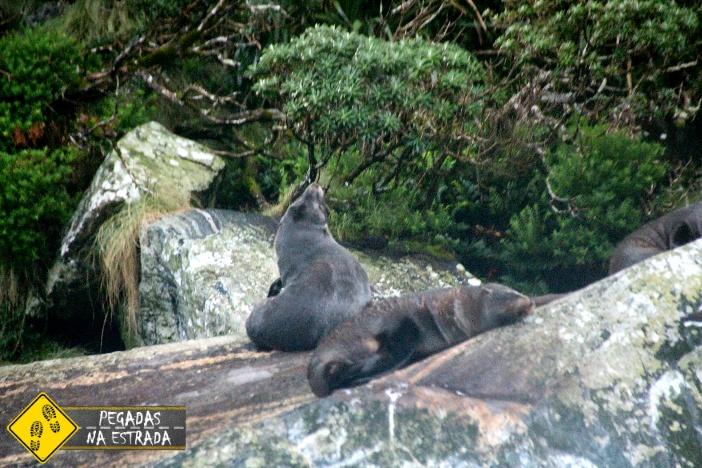 Pontos turísticos Milford Sound