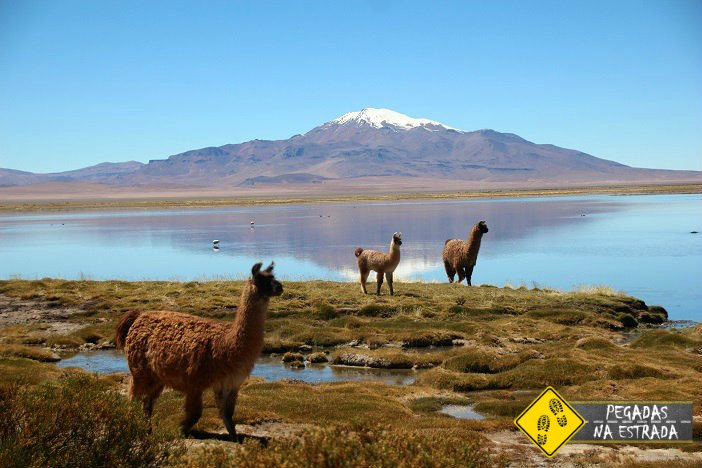 roteiro de 7 dias pelo deserto do Atacama.