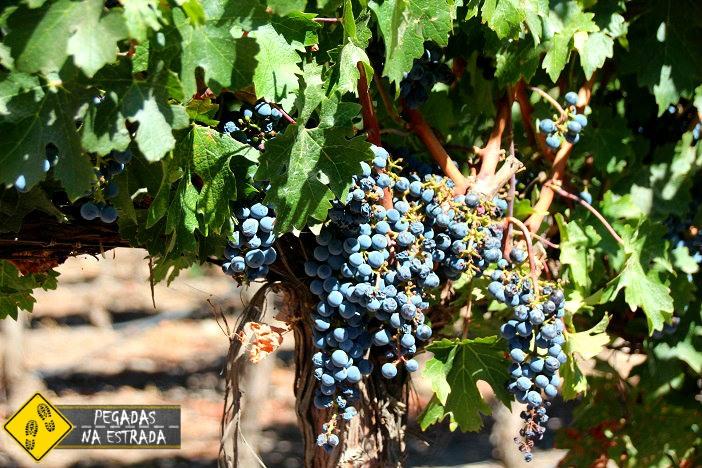 Melhores vinícolas de Santiago chile