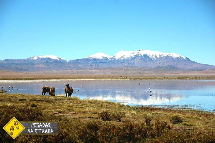 Salar de Tara Atacama