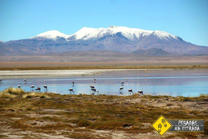 Salar de Tara vida selvagem Atacama