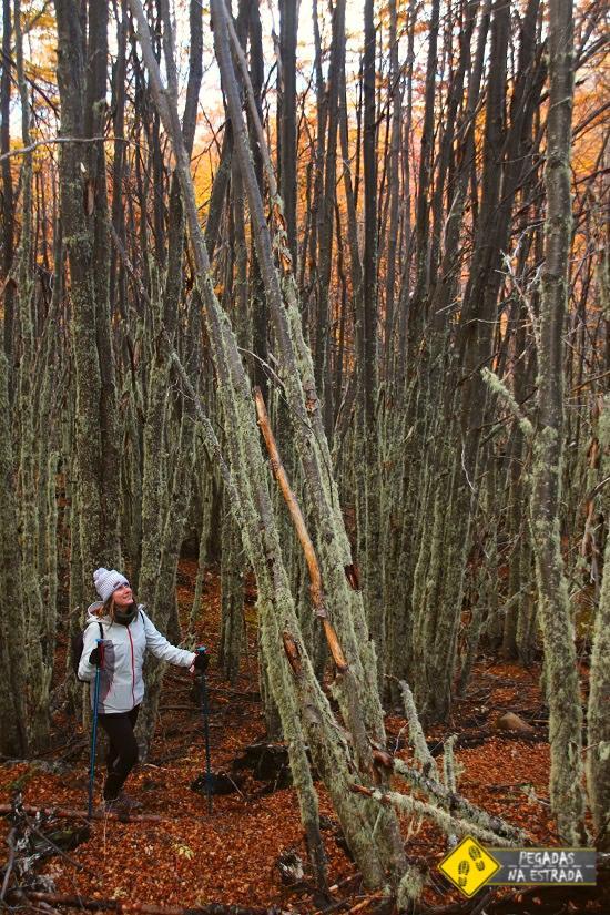 Parque Nacional Patagônia Chile o que fazer