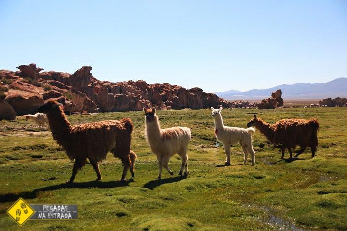 Lhamas Valle de Rocas Bolívia