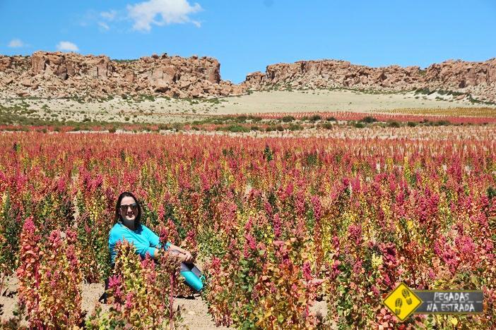 Plantação de Quinoa Bolívia